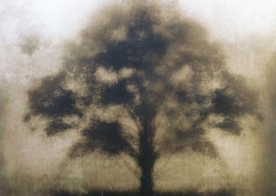 LONE TREE AT BLACKWELL